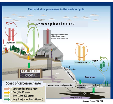 Carbon cycle carbon dioxide is the top greenhouse gas in causing global warming and climate change and it also causes ocean acidification ccuart Gallery