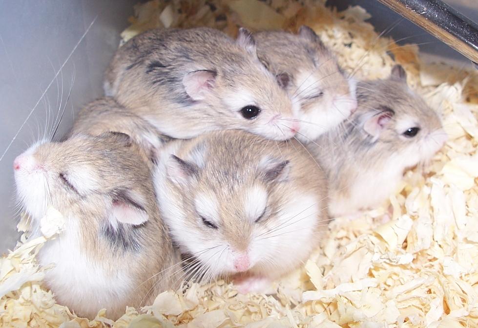foto x hamster
