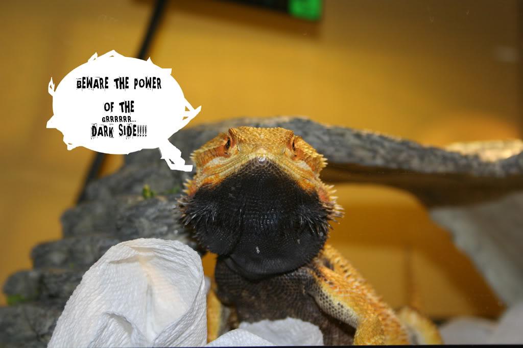 Dragon With Beard Bearded Dragons Health