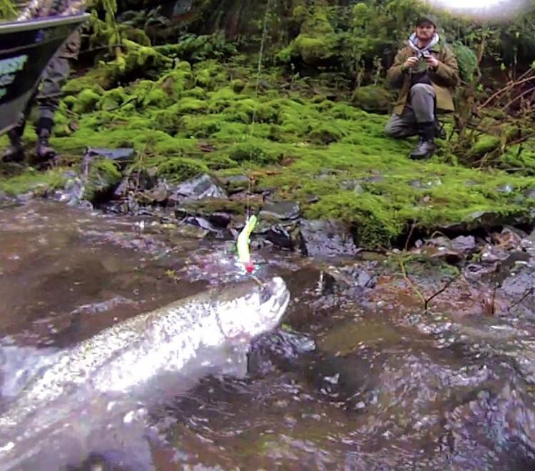 Kalama river guided fishing guided salmon steelhead for Kalama river fishing