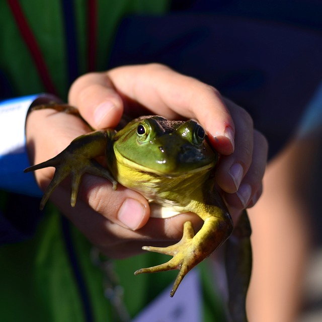 frog-731790_640