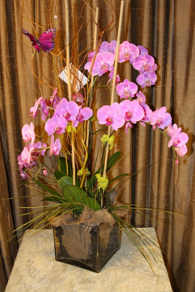 Pink Obsession Orchids by belle fleur