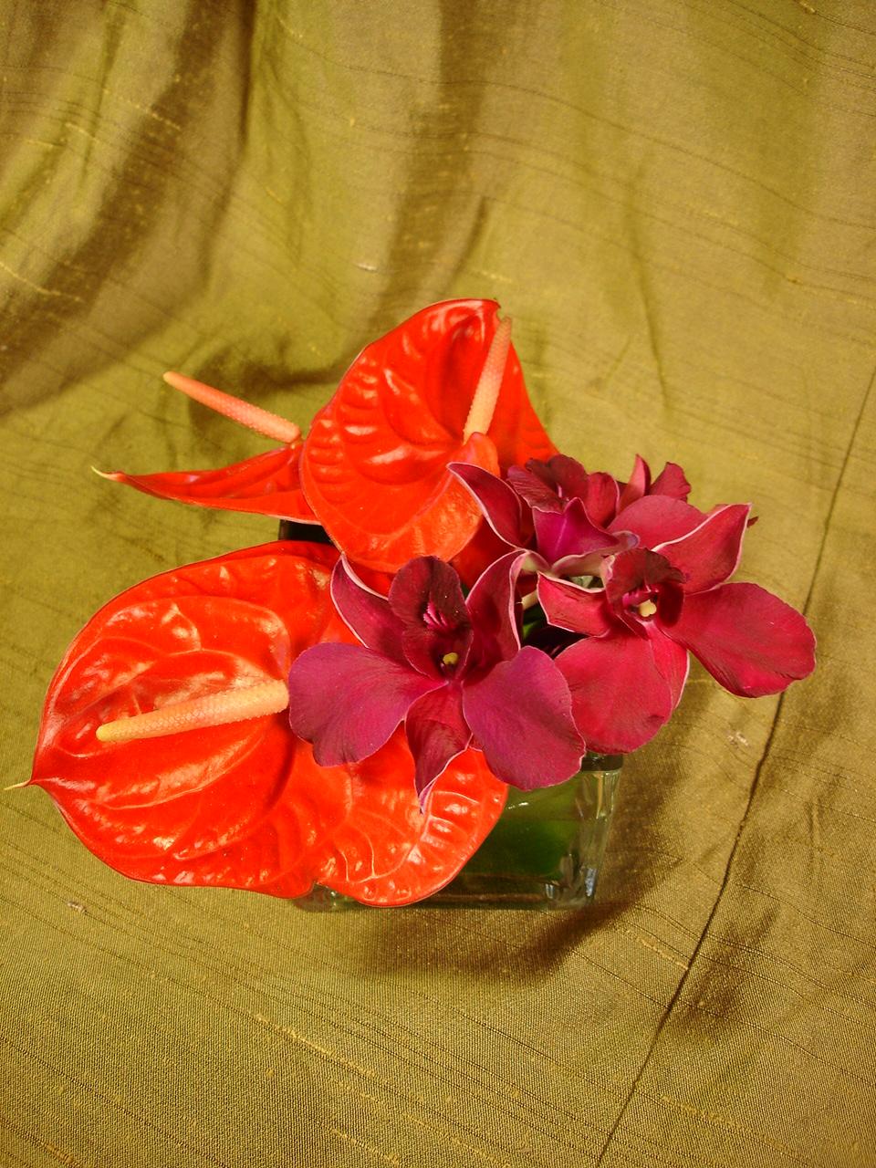 Open Hearth Shape Anthuriums by belle fleur