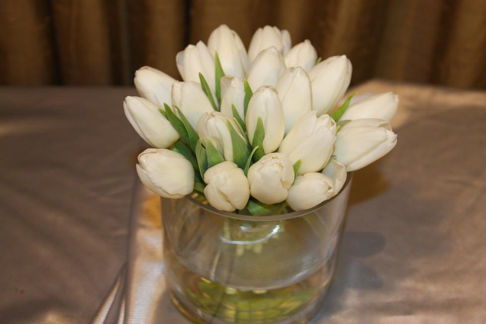 Alluring Tulips Festival by belle fleur