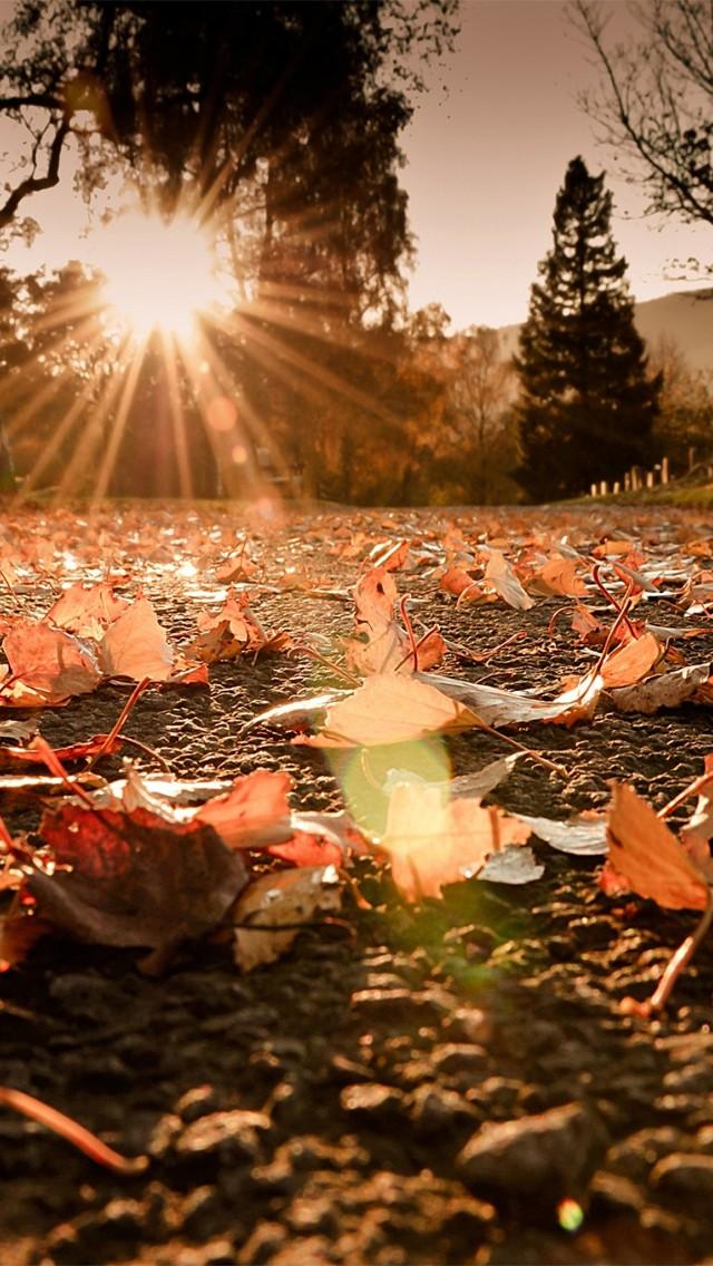 sun peering through the trees