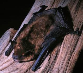 remove bats from home