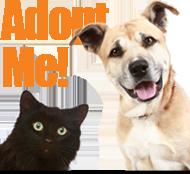 Pet Adoption, Waukesha, Wisconsin