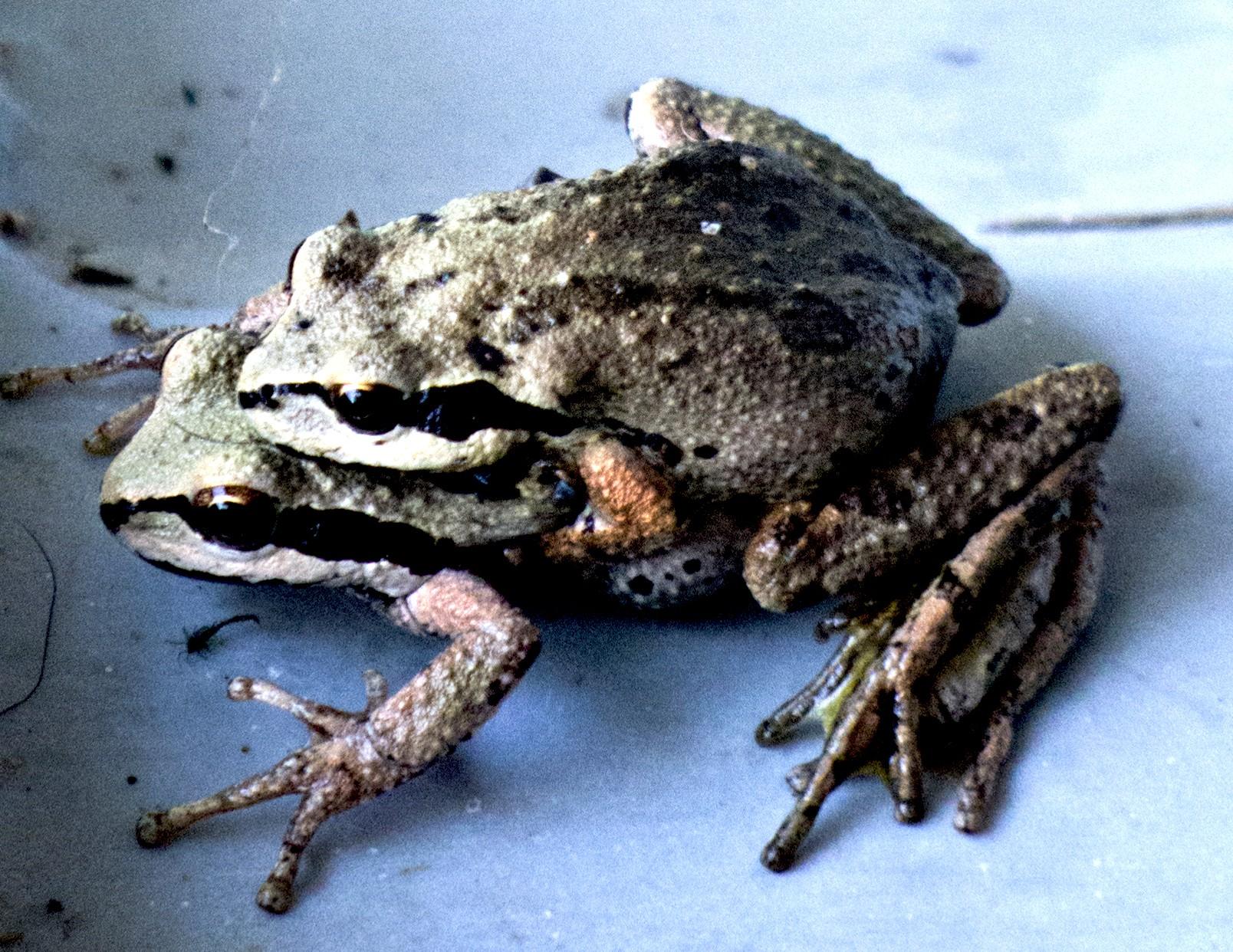 frogsmatebest