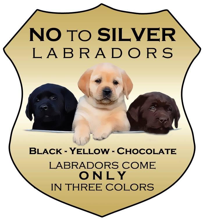 River Retrievers Preserving The Dual Purpose Labrador