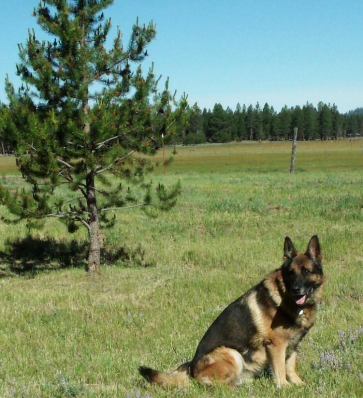 Bend Oregon Service Dogs
