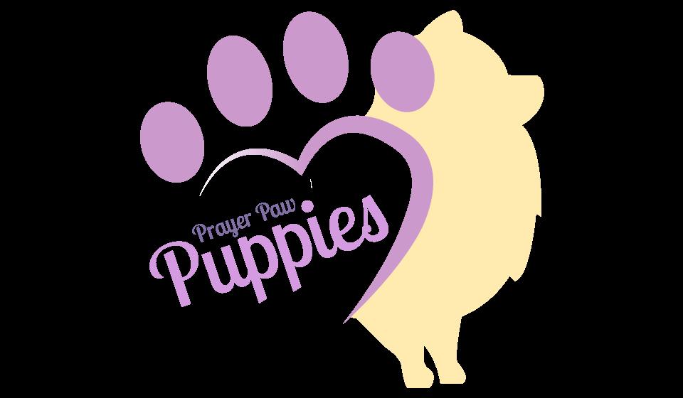 Tan & Black Pomeranian Puppies for Sale - Litters in Spokane MO