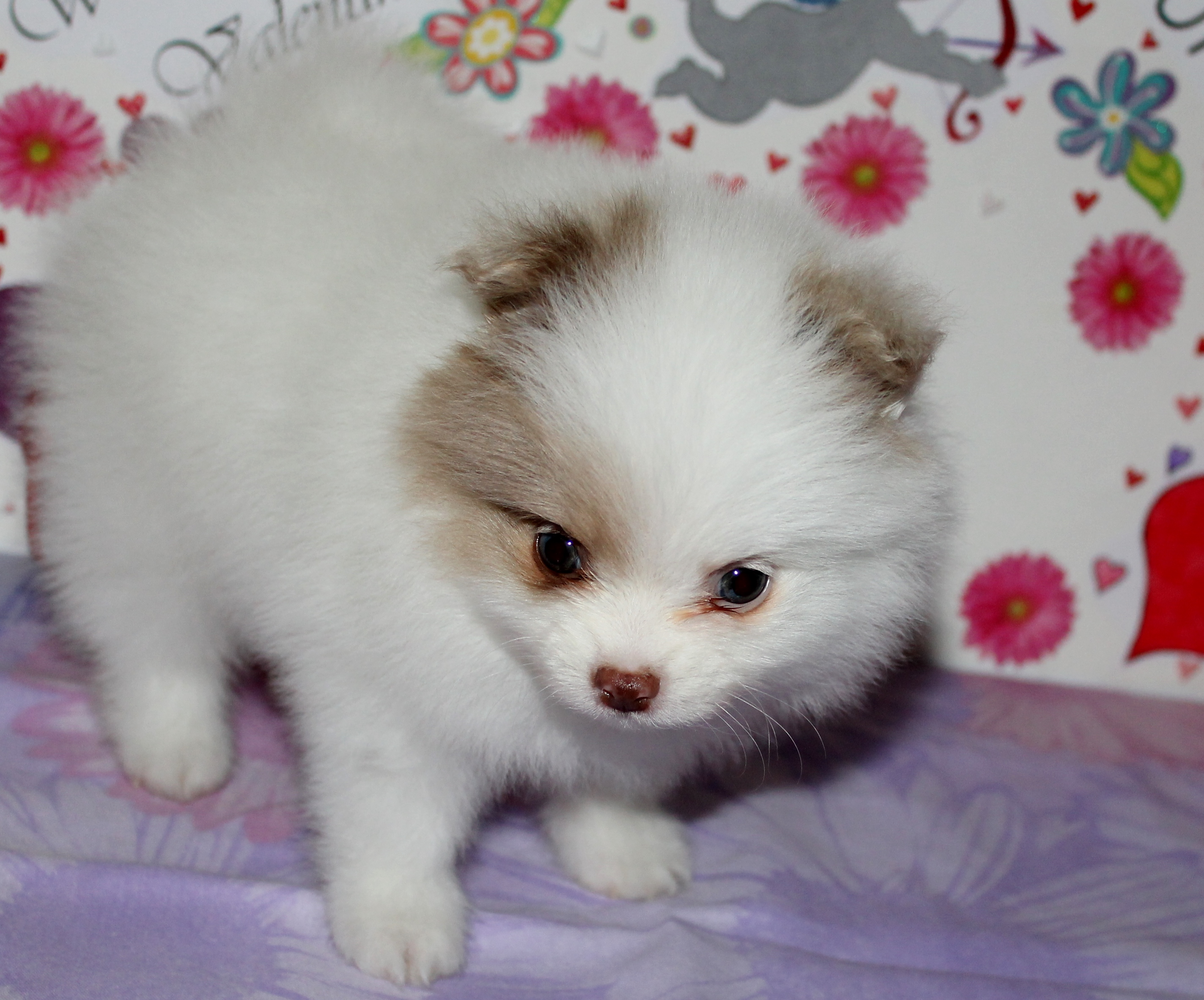 My webstarts website past puppies nvjuhfo Image collections