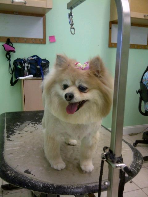 Pet groomer, pet grooming, pet groomers, dog groomer, dog grooming, dog groomers, cat groomer, cat grooming, cat groomers, home groomer, home grooming, home groomers