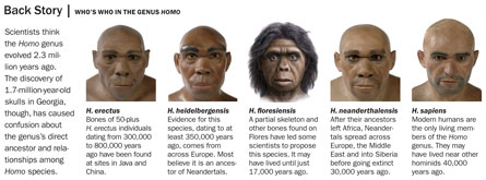 evolution of the genus homo the modern synthesis Learn more about homo rudolfensis and where this species fits into human evolution homo a member of the genus homo the anatomically modern traits.