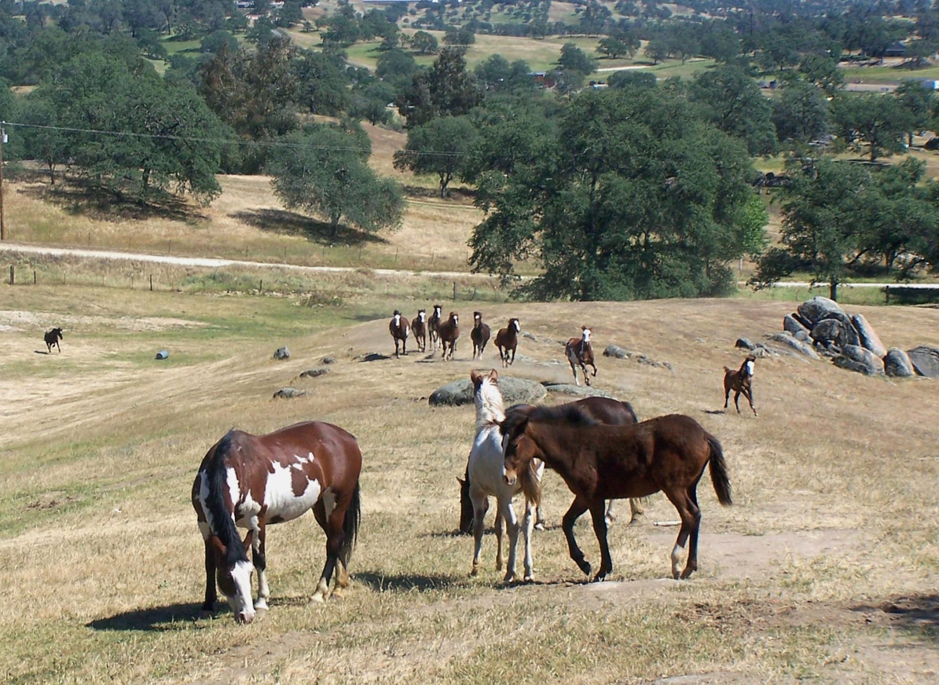 The Spanish Cruce Horse Ranch