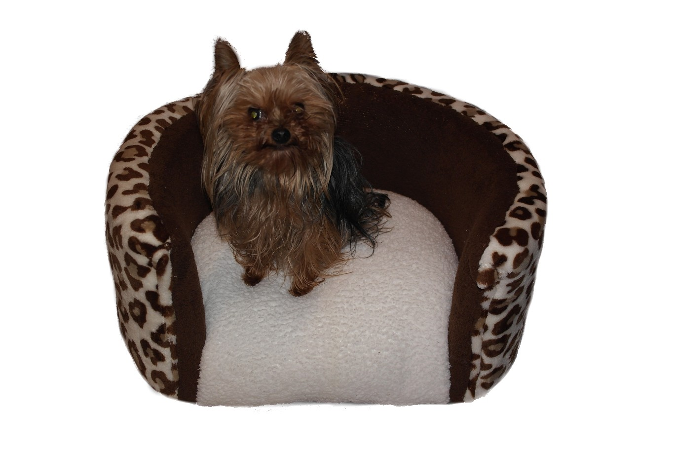 Cheetah and brown with lexus Print Dog Bed RESIZED