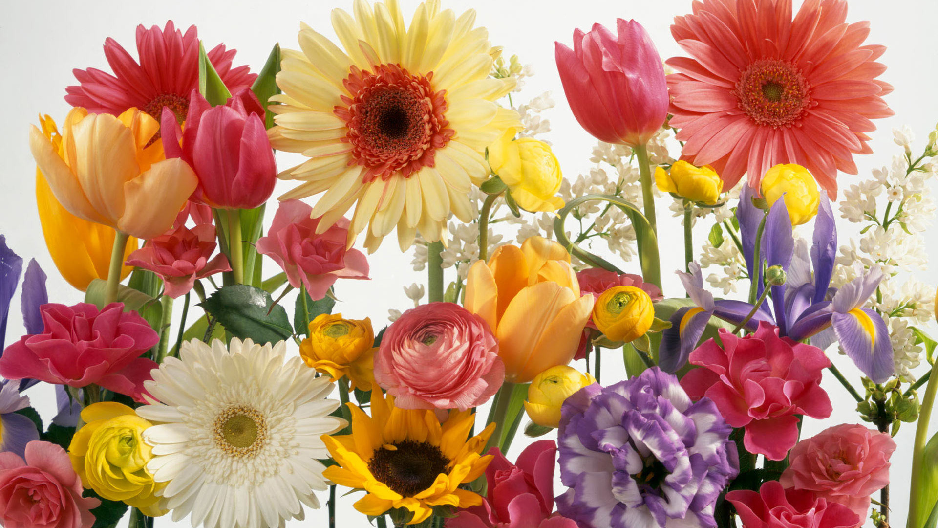 gather flowers wallpapers - photo #1