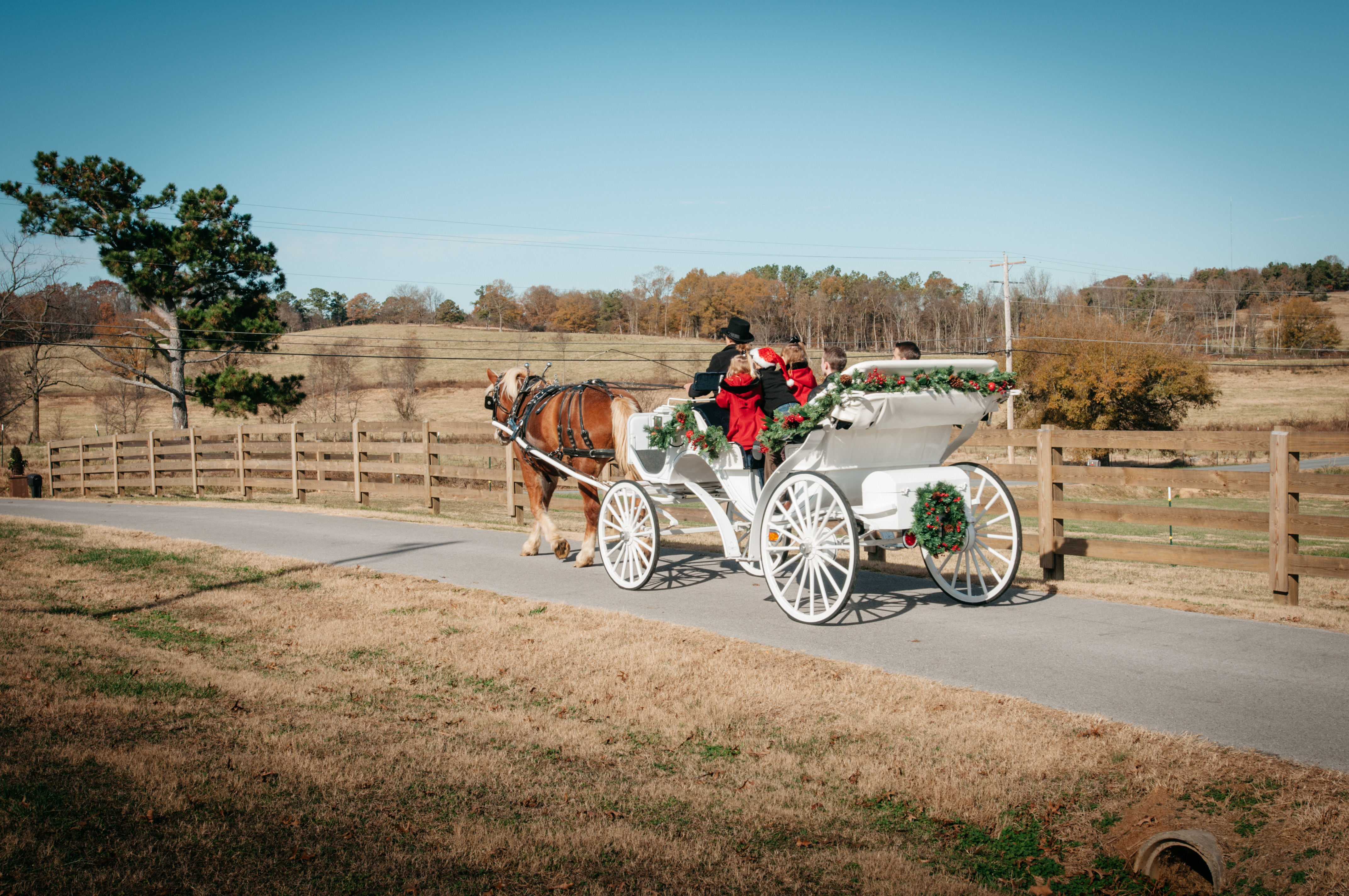 carriage_by_fence_christmas.jpg