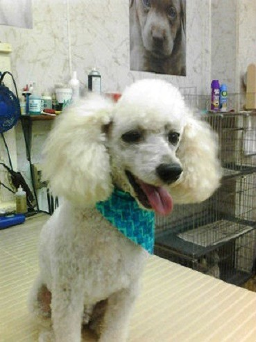Mari-Brook_Pet_Grooming_Quad_Cities
