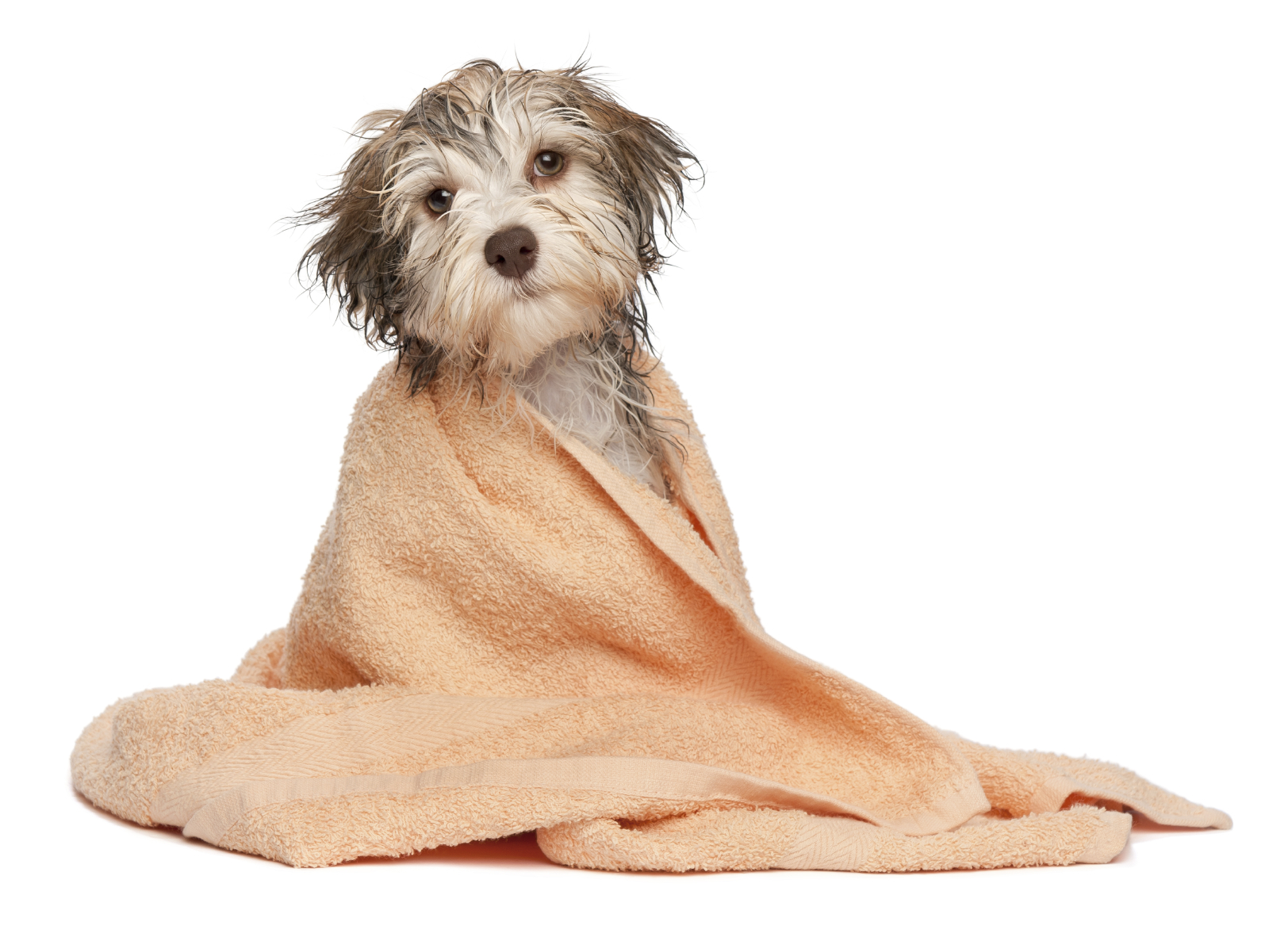 Mari-Brook_Pet_Grooming_Dog_Bathing_Moline_Quad_Cities