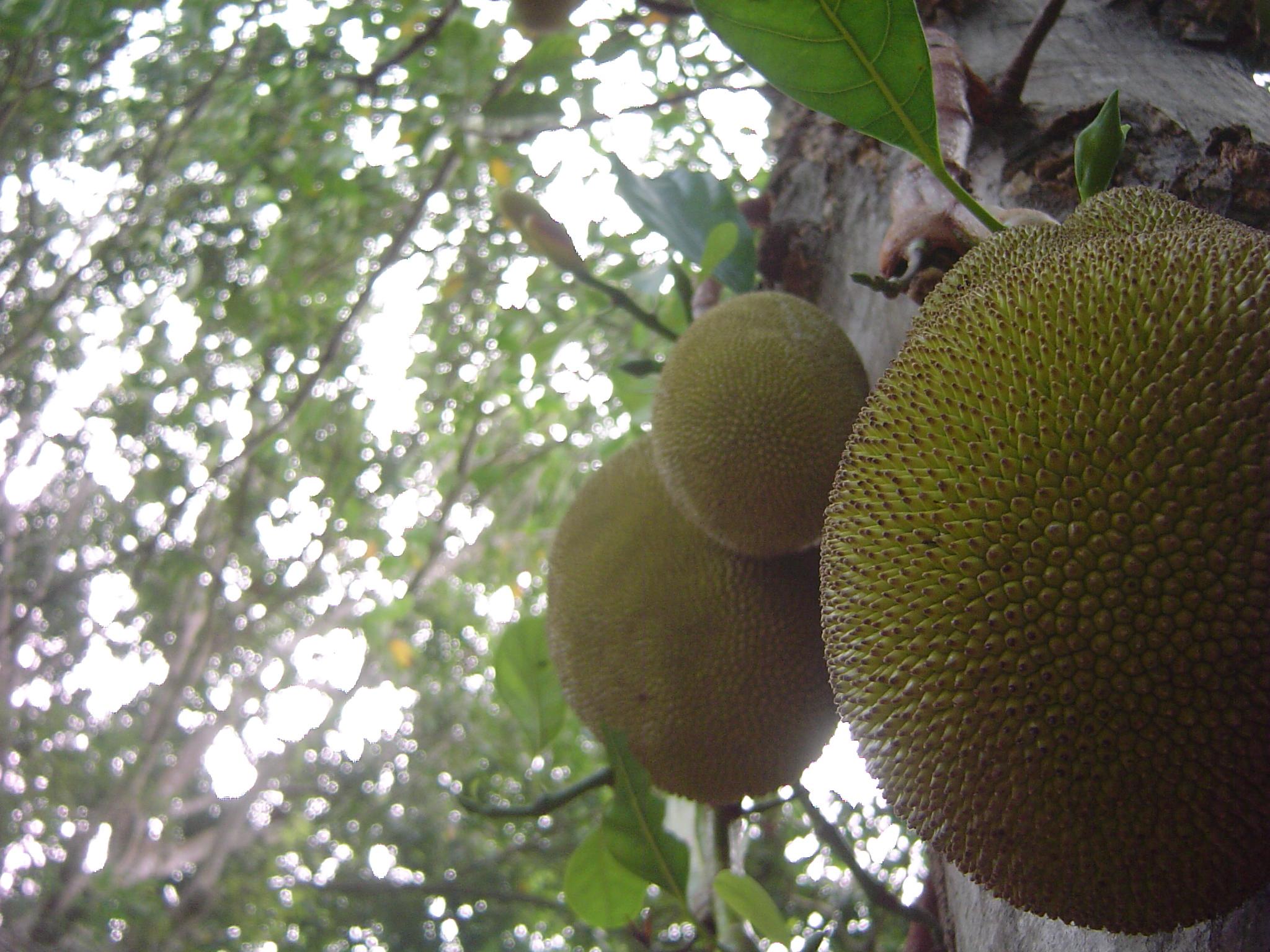 Andromeda Botanic Gardens Barbados, Contact