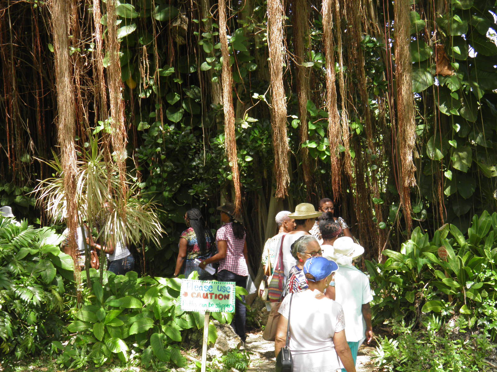 Explore National Botanic Gardens Barbados - Today\'s Homepage