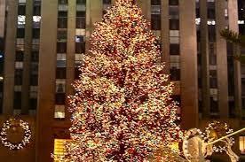 nyc tree2