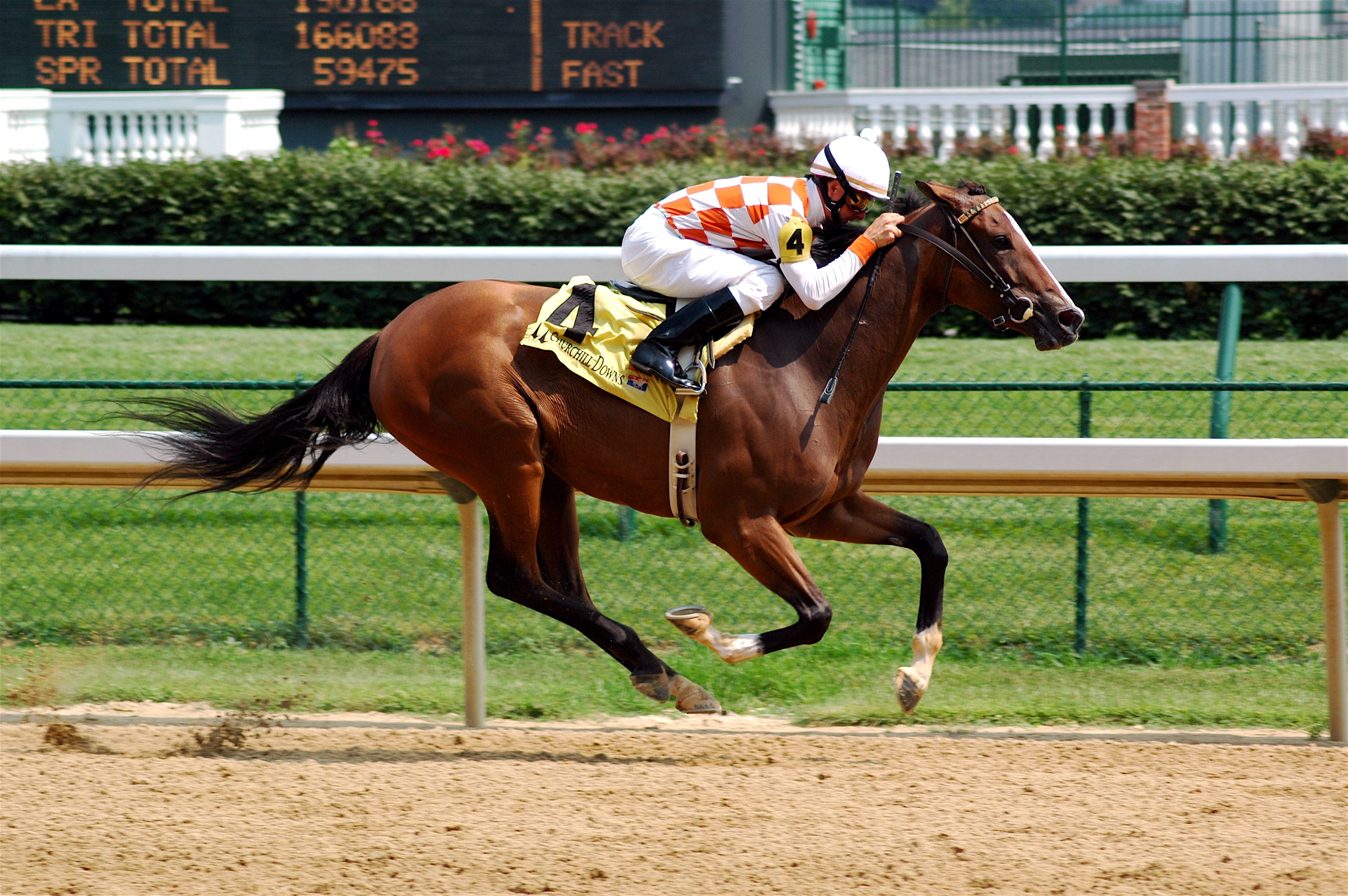 horse_racing_photo.jpg