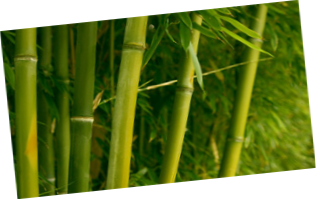 BAMBOO_717.png