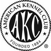 AKC Havanese Description