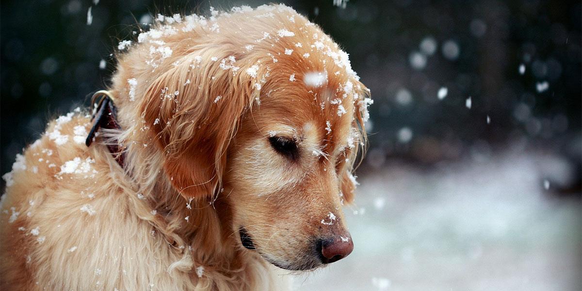 https://static.secure.website/wstfus/2702/uploads/Snow-Dog-l.jpg