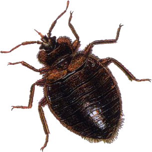 Enviro Guard and or Insecta Shield products will eliminate the bed bugs  today and help you control any future outbreaks of bed bugs  roaches  ants   lice. aiminternationalus